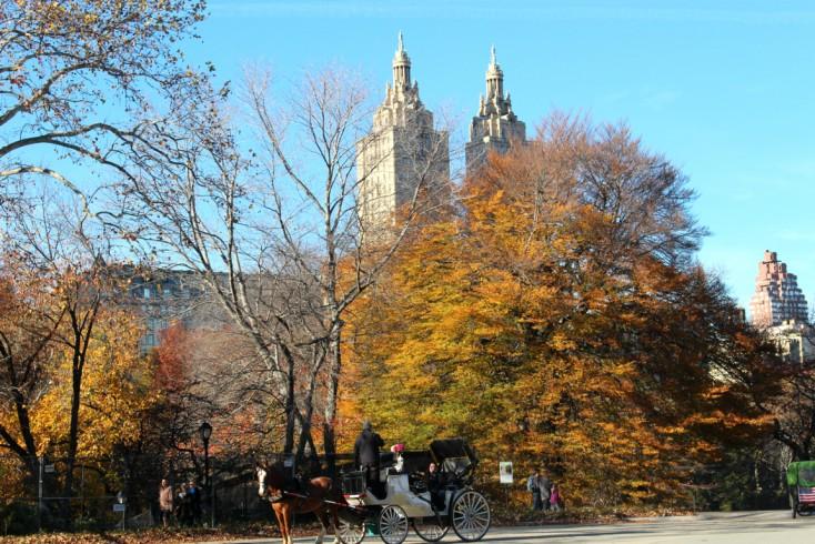 Central Park y Empire State|Día 6 NY 1